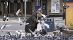 Pigeon man of Morecambe 10-08-2013