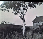 Dukinfield old hall church Linda Lee  50s early 60s