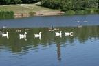 Stalybridge Park