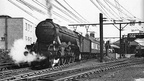 Class A3 Pacific No.60104 'Solario' restarts a Manchester to Marylebone Express from Penistone Station,1950's